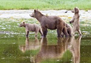 kinky 3 cubs alarmed